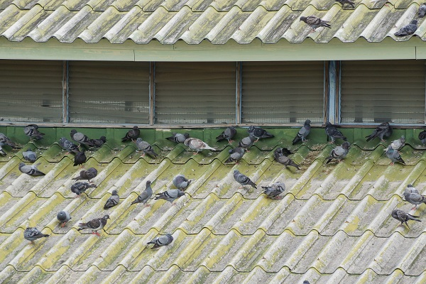 Guaranteed Birds Pest Control in Melbourne at Best Price