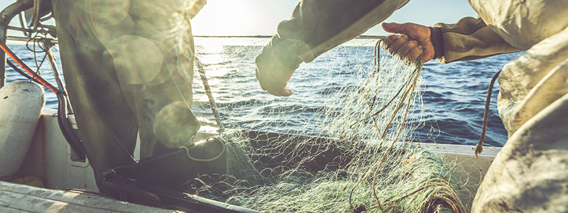 How to become a Fisheries Officer | The Good Universities Guide