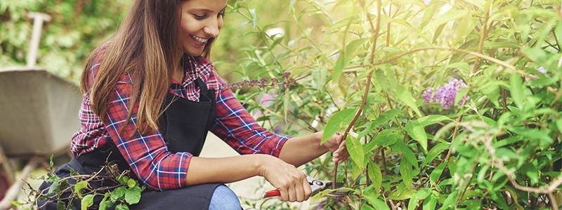 Horticultural Assistant