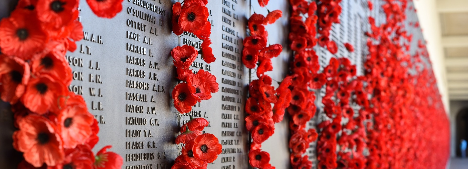 All you need to know about Remembrance Day 2018 | Study in
