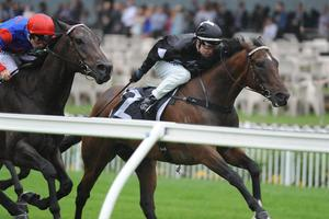 Picture of race horse: Ecuador