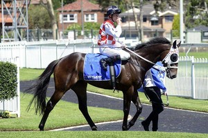Picture of race horse: Pentometer