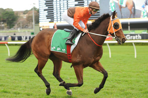 Picture of race horse: Title