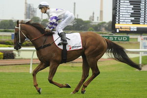 Picture of race horse: Hurrara