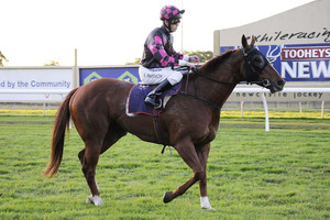 Picture of race horse: Magic Cassius