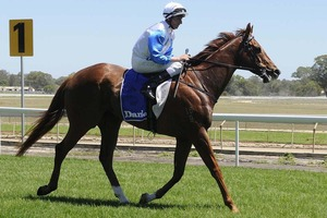Picture of race horse: Oh George