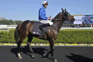 Picture of race horse: Barbed