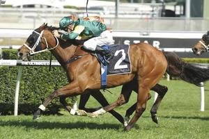 Picture of race horse: Moriarty