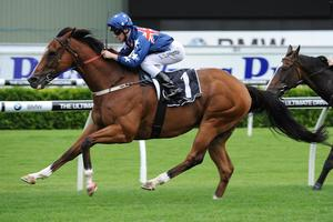 Picture of race horse: Monton