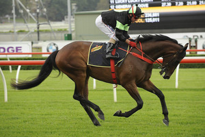 Picture of race horse: Gamblestown