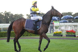 Picture of race horse: Mighty Lucky
