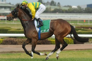 Picture of race horse: Hunter Jack