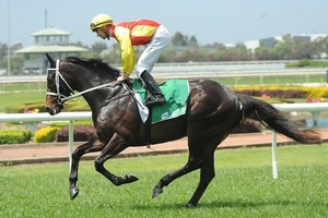 Picture of race horse: Good Project