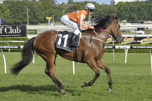 Picture of race horse: Magical Stance