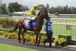 Picture of race horse: Heavens Above