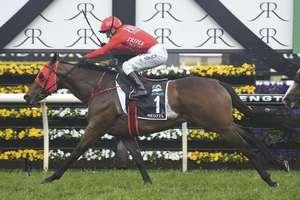 Picture of race horse: Redzel