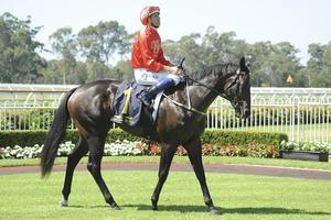 Picture of race horse: Denpurr