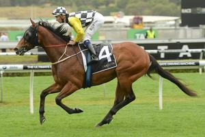 Picture of race horse: Lunar Rise
