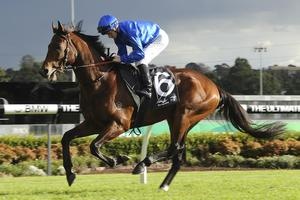 Picture of race horse: Grunderzeit