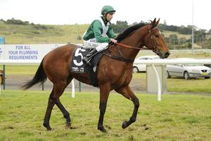 Picture of race horse: Man of Choice