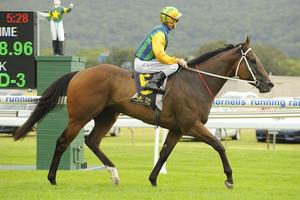 Picture of race horse: Ball of Muscle