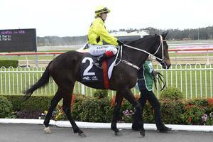 Picture of race horse: Danish Twist