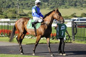 Picture of race horse: Gambler's Blues