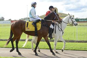 Picture of race horse: Got Unders