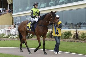 Picture of race horse: Denmagic