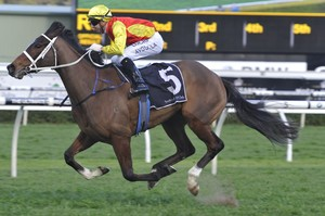 Picture of race horse: Omei Sword