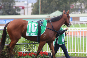 Picture of race horse: Sort After