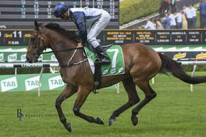 Picture of race horse: Shalmaneser
