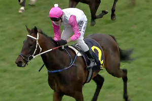 Picture of race horse: Heavenly Anna