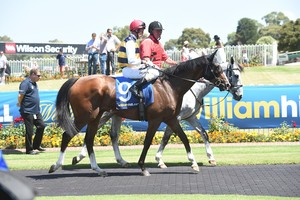 Picture of race horse: Tom Melbourne