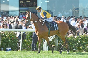 Picture of race horse: Mackintosh