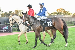 Picture of race horse: Zourkhan