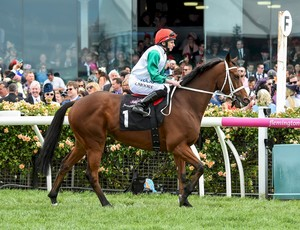Picture of race horse: Kinema