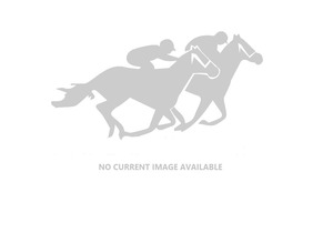 Picture of race horse: On the Spot