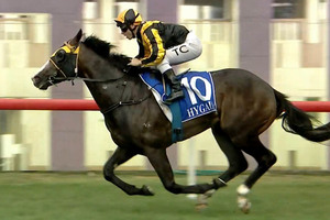 Picture of race horse: Trapeze Artist