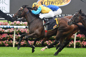 Picture of race horse: Diamond Tathagata