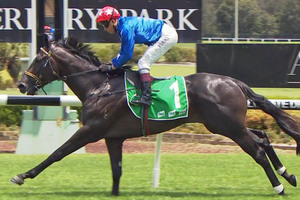 Picture of race horse: Harper's Choice