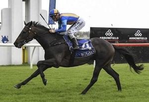 Picture of race horse: Impavido