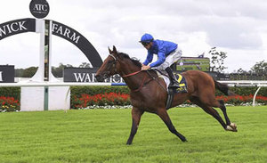 Picture of race horse: Astoria