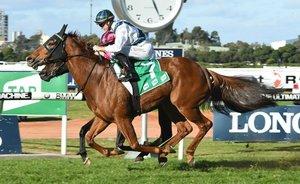 Picture of race horse: Magic Alibi