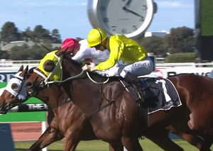 Picture of race horse: Vaucluse Bay