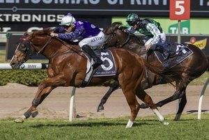 Picture of race horse: Shogun Sun