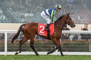 Picture of race horse: Merchant Navy