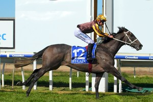 Picture of race horse: Sully