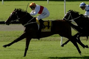 Picture of race horse: Cordero