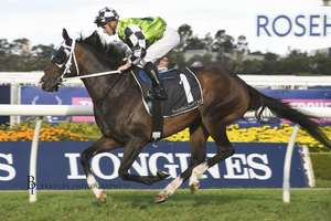 Picture of race horse: Mister Sea Wolf